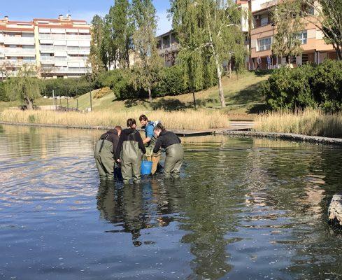 La Bustia captura de peixos al Parc Olesa