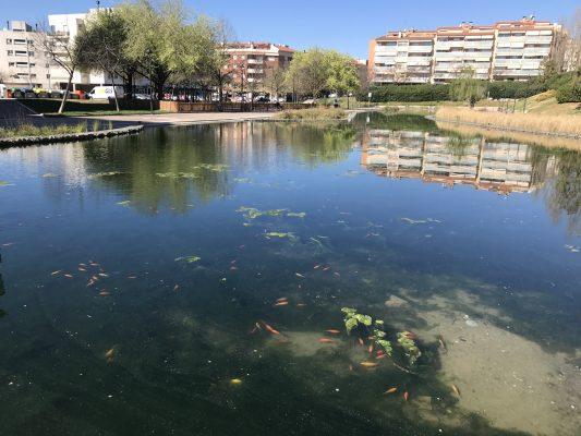 La Bustia peixos i algues Llac Olesa
