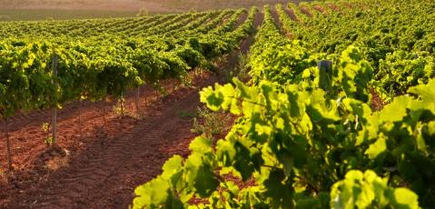 la bustiax vinya