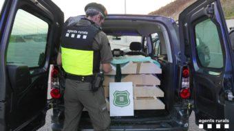 La Bustia agents rurals contra trafic especies protegides Martorell