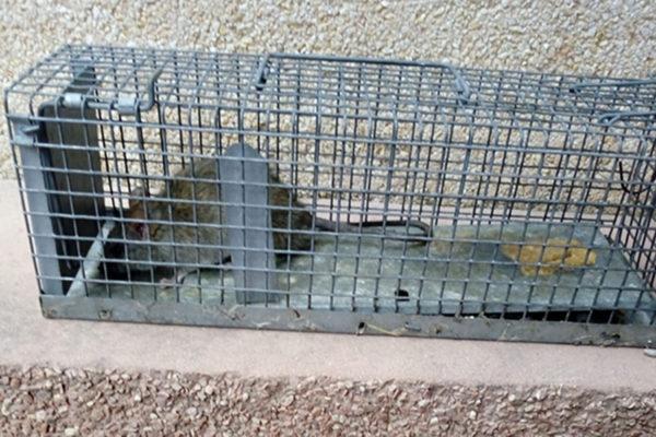 Sant Esteve - La Bustia - rates