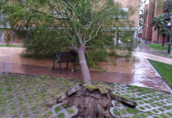 La Bustia Martorell arbre gran Martorell