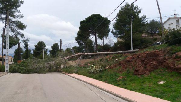 La Bustia arbre caigut El Taio Castellvi