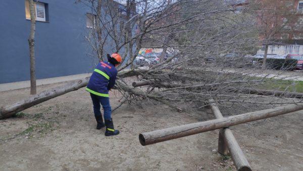 La Bustia arbre caigut Sant Andreu