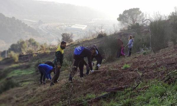 Martorell - La Bustia - reforestacio