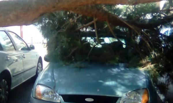 Olesa - La Bustia - arbre cotxe