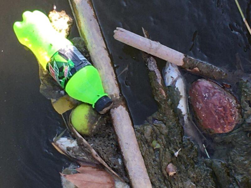 La Bustia peixos barbs mort riu Anoia Martorell