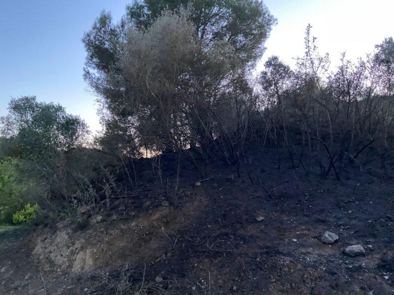 La Bustia incendi Masquefa (2)