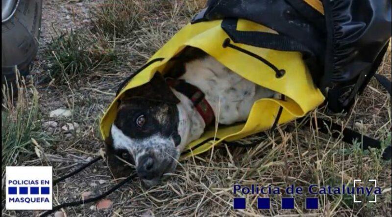 La Bustia gos salvat Masquefa