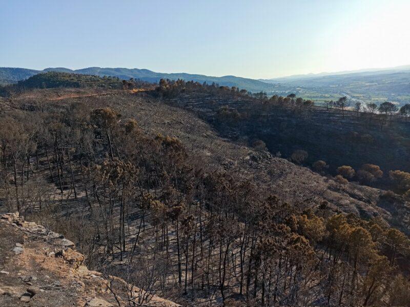 La Bustia despres incendi Castellvi i Martorell 2021 Visual Media 2