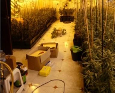 La Bustia plantacio marihuana