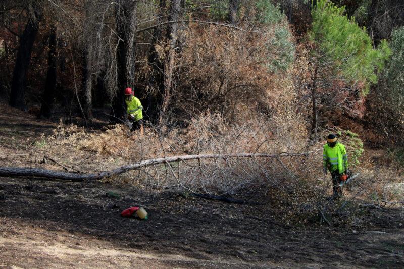 La Bustia reforestacio incendi Castellvi Martorell (1)