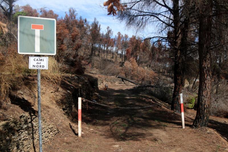 La Bustia reforestacio incendi Castellvi Martorell (4)