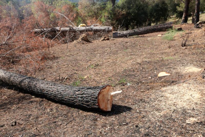 La Bustia reforestacio incendi Castellvi Martorell (5)