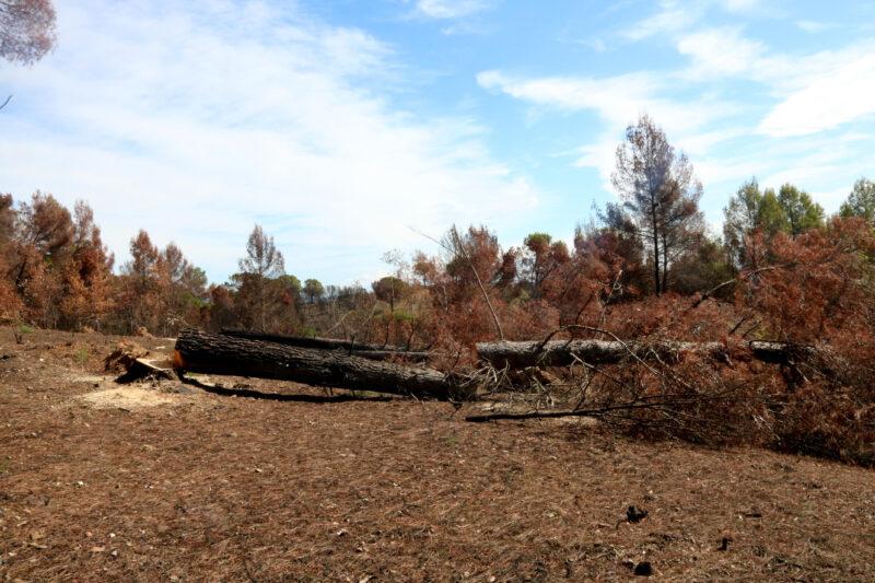 La Bustia reforestacio incendi Castellvi Martorell (6)