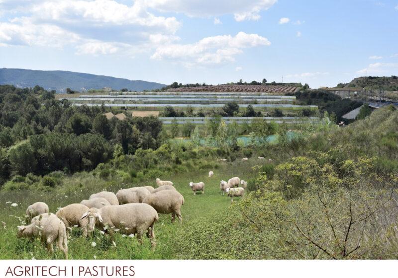 La Bustia 7 pastures 2 projecte Agroparc Penedes Gelida