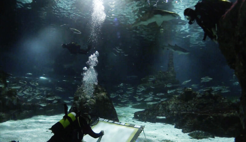 La Bustia Markus D Martorell Aquarium Barcelona 1