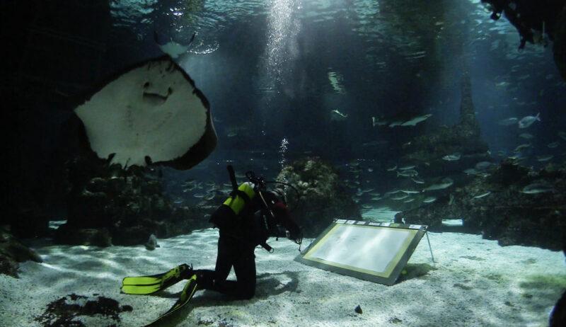 La Bustia Markus D Martorell Aquarium Barcelona 2