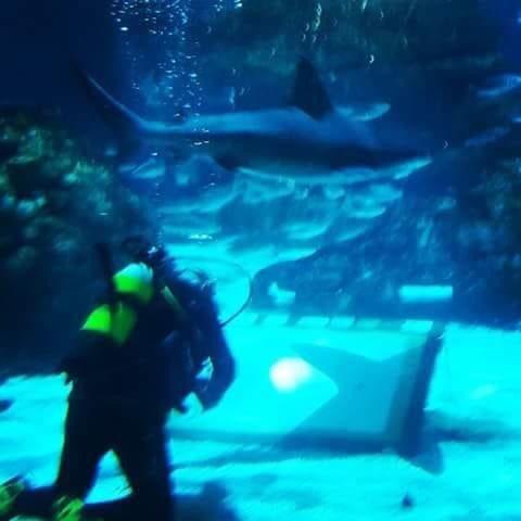 La Bustia Markus D Martorell Aquarium Barcelona 3